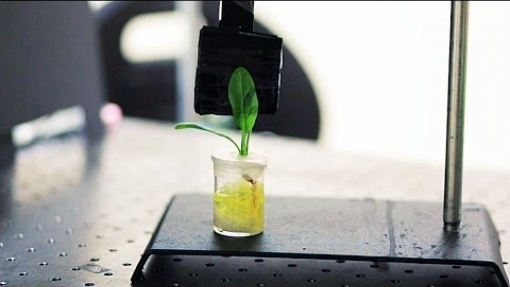 Nanobionic spinach plants can detect explosives